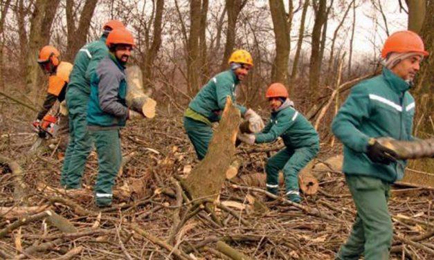 Uklanja se šumsko rastinje