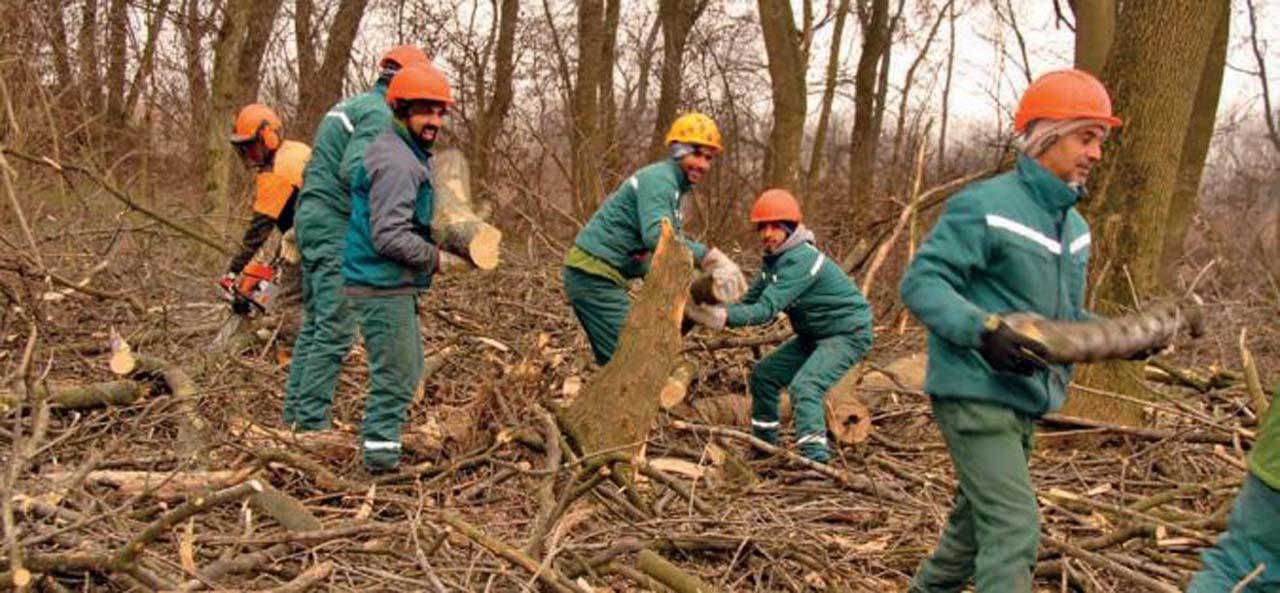 Уклања се шумско растиње