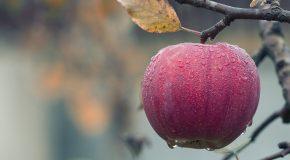 Uputstvo za proizvođače voća i povrća za dobijanje odobrenja za kretanje