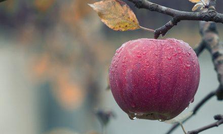 Упутство за произвођаче воћа и поврћа за добијање одобрења за кретање