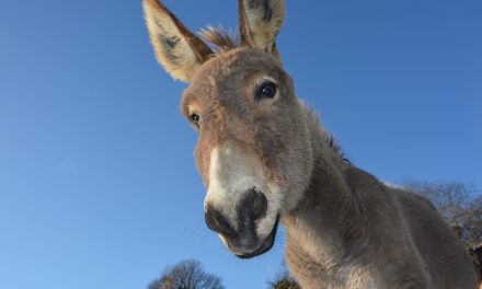 Danas je Dan magaraca