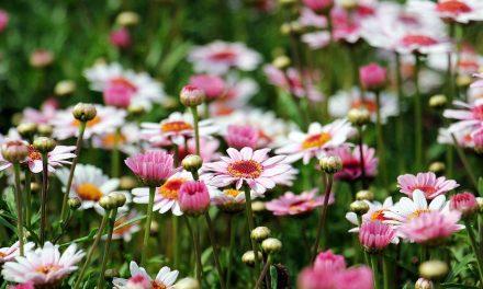 Данас су Цвети: Дан за радост, али без уобичајеног окупљања