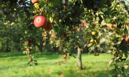 Javni poziv za nabavku mašina i opreme u biljnoj proizvodnji