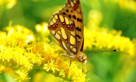 28. maj: Svetski dan leptira