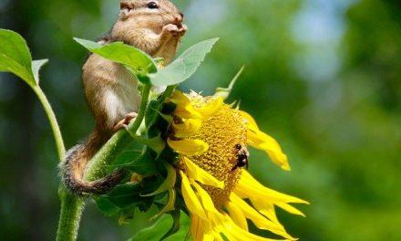 Međunarodni dan biološke raznovrsnosti