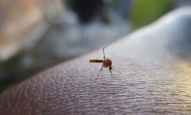 U petak tretman suzbijanja larvi komaraca na teritoriji grada Požarevca i Kostolca
