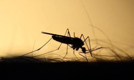 Žabari: U sredu tretman suzbijanja komaraca