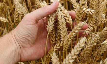 Podnesite zahtev za podsticaje za organsku biljnu proizvodnju do 30. juna