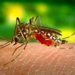 Suzbijanje larvi komaraca na teritoriji opštine Veliko Gradište