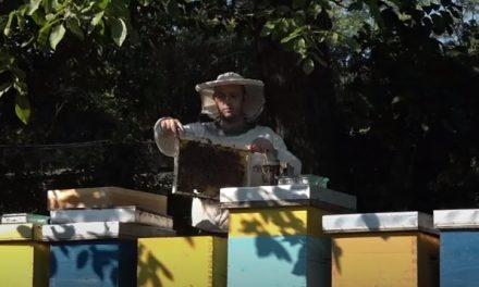 Podrška lokalne samouprave veliki podsticaj za mlade pčelare opštine Žagubica