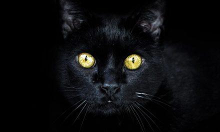 Srećan dan crnih mačaka!