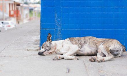 Danas je Svetski dan napuštenih životinja