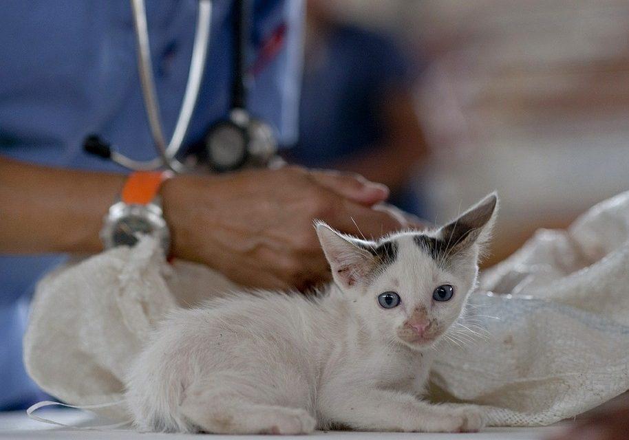 """Rusi prave vakcinu i za životinje: """"Pojavila se korona među mačkama"""""""