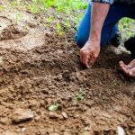 Kako doći do besplatnog državnog poljoprivrednog zemljišta