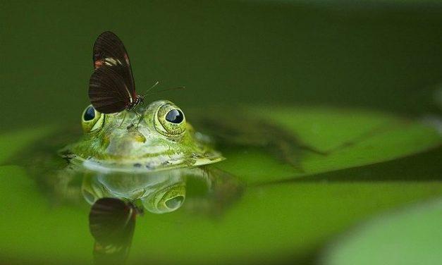 Populacije divljih vrsta od 1970. godine u proseku smanjene za dve trećine