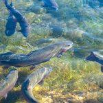 Javni poziv za dodelu sredstava za finansiranje nove opreme za ribnjake