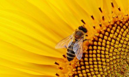 Podnošenje Zahteva za ostvarivanje prava na podsticaje po košnici pčela u 2021. godini