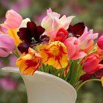 Mnogo više od ukrasa: Glavni razlozi zbog kojih bismo u domu trebali imati cveće