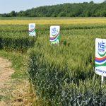 OdržanDan polja ozimih strnih žita