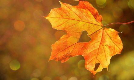 Stiže nam jesen